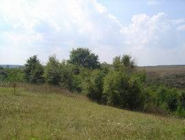 HS 134Attractive plot in ecologically clean area!We are pleased to offer at your attention this