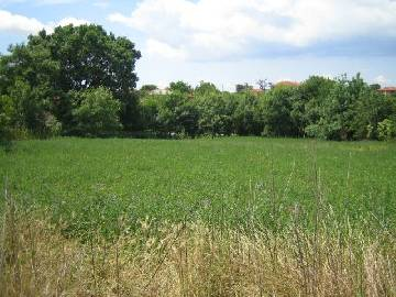 HS 159 Cheap rural home with vast plot! This lovely rural property is situated 28km far from